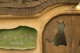 animal kedi kafe konsepti
